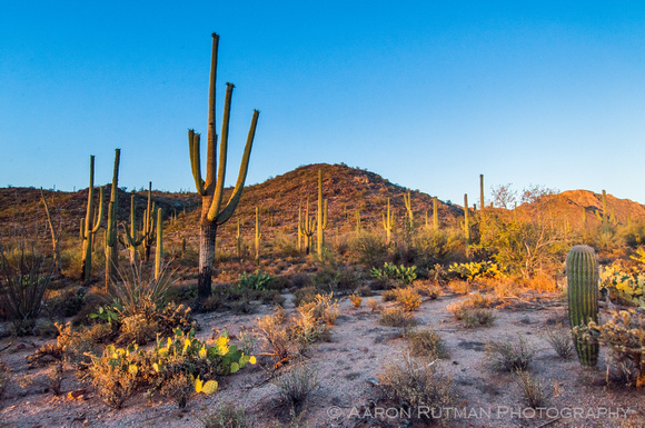 Saguaro National Park West, AZ