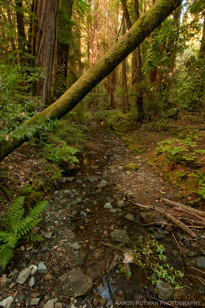 Redwood Creek, Muir Woods